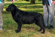 GCH Aron's A Shady Bet at CaerCreek (Gamble)